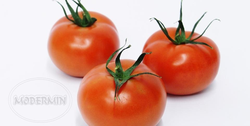 Tomate Liso